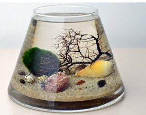 marimo moss ball aquarium