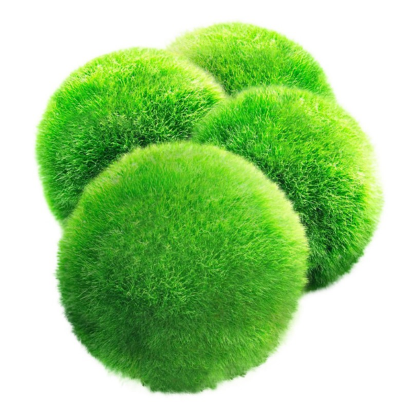 Medium Marimo Moss Balls.